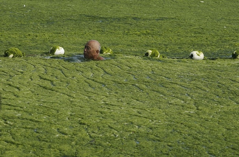 algae-china-beach 6
