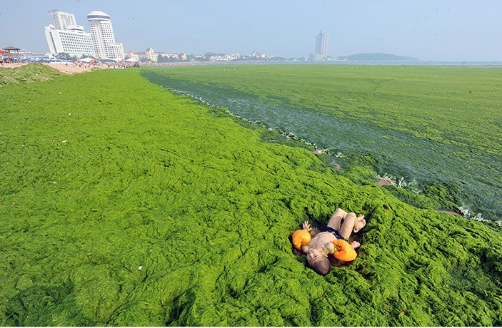 algae-china-beach 7