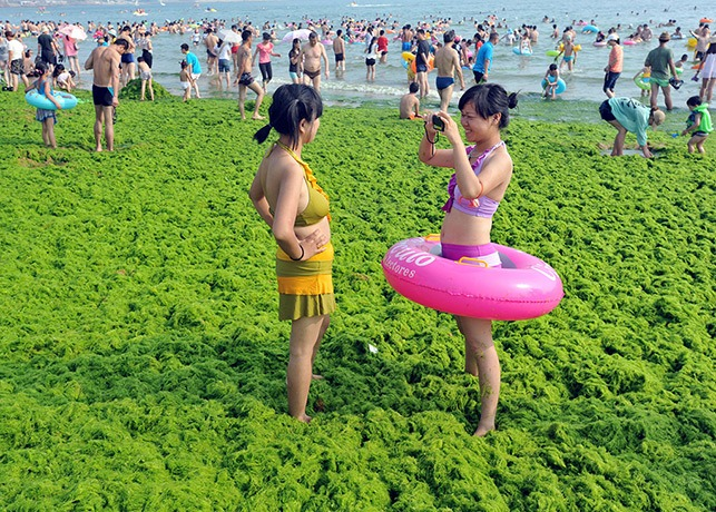 algae-china-beach 9
