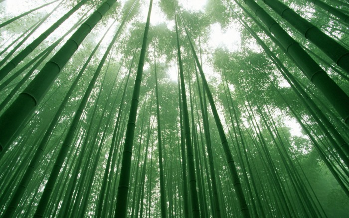 Southern Sichuan Bamboo Forest