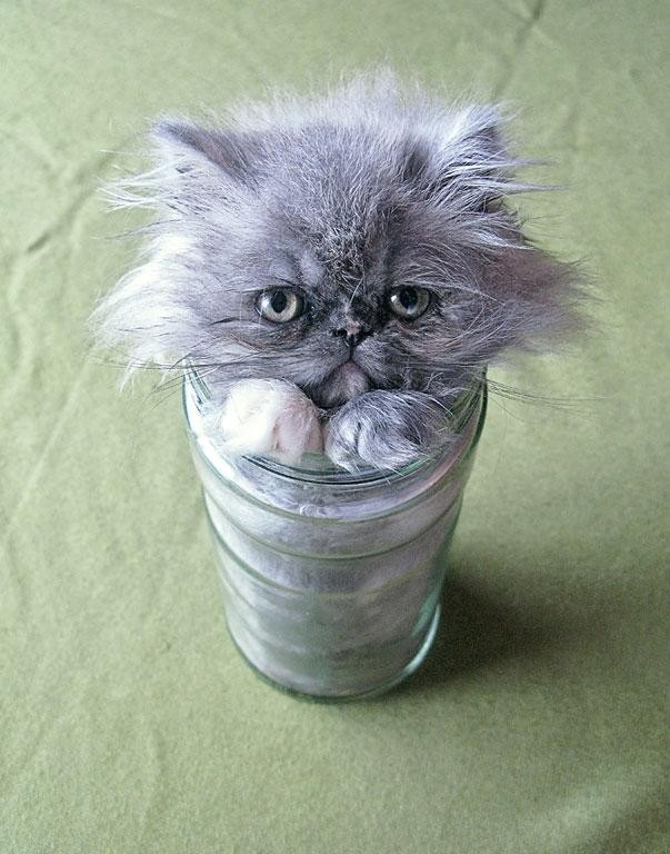 funny liquid cats in jar