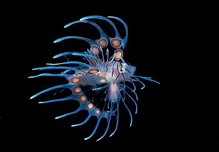 miami-underwater-photo-contest-10[6]