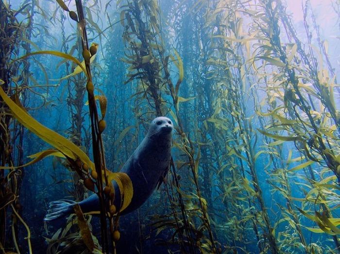 miami-underwater-photo-contest-1[2] (1)