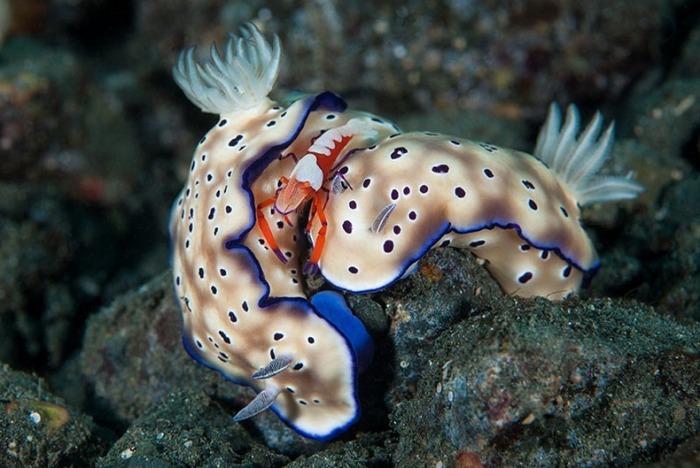 miami-underwater-photo-contest-14[6]