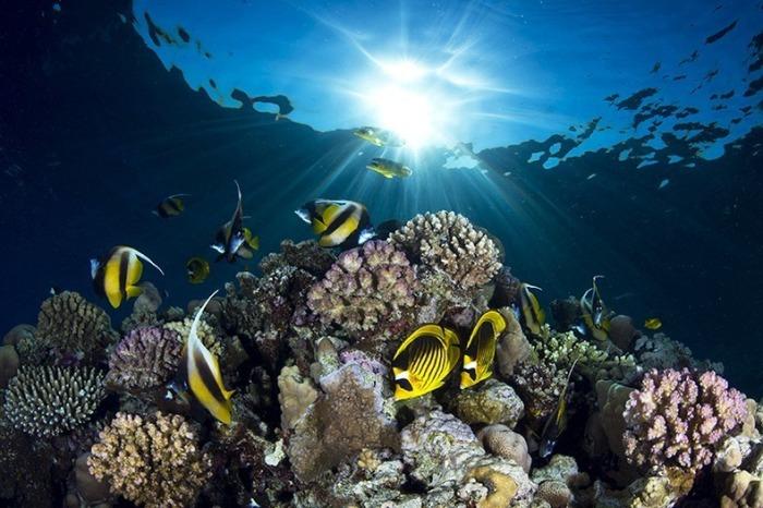 miami-underwater-photo-contest-3[2]