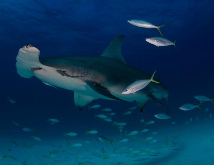 miami-underwater-photo-contest-5[6]