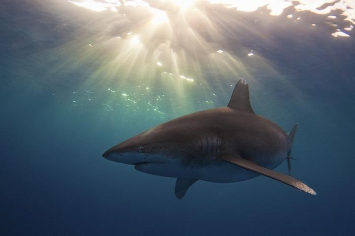 miami-underwater-photo-contest-7[2]