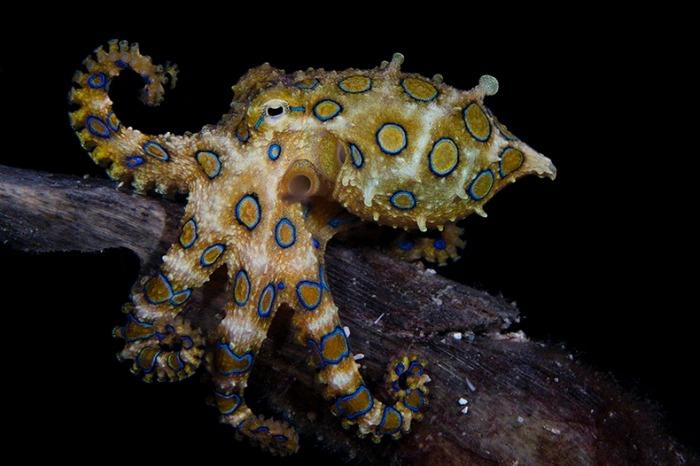 miami-underwater-photo-contest-8[5]