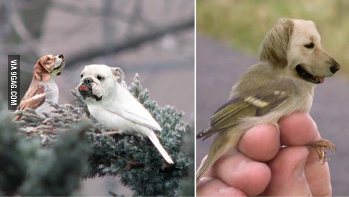 This Is What Happens When You Combine A Dog With A Bird