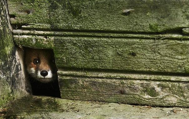 [Image: abandoned-homes-animals-18.jpg?w=700]