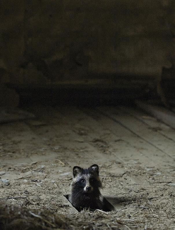 Wild Animals Making Themselves at Home in Abandoned Places