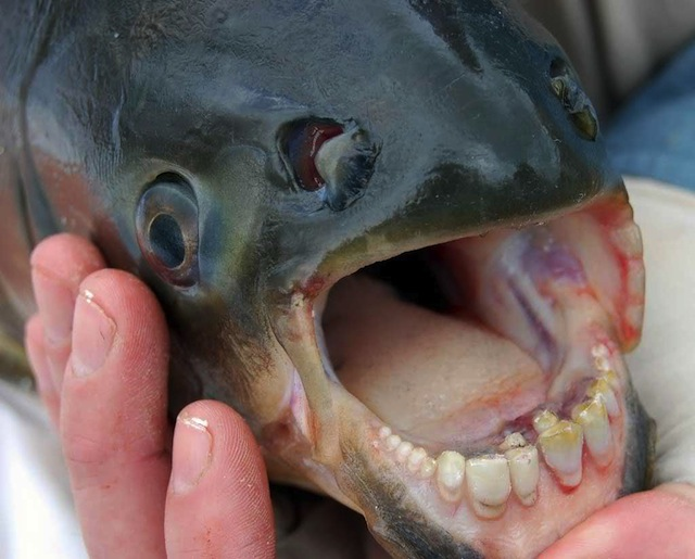 Bizzare Animal Creatures That Actually Exist