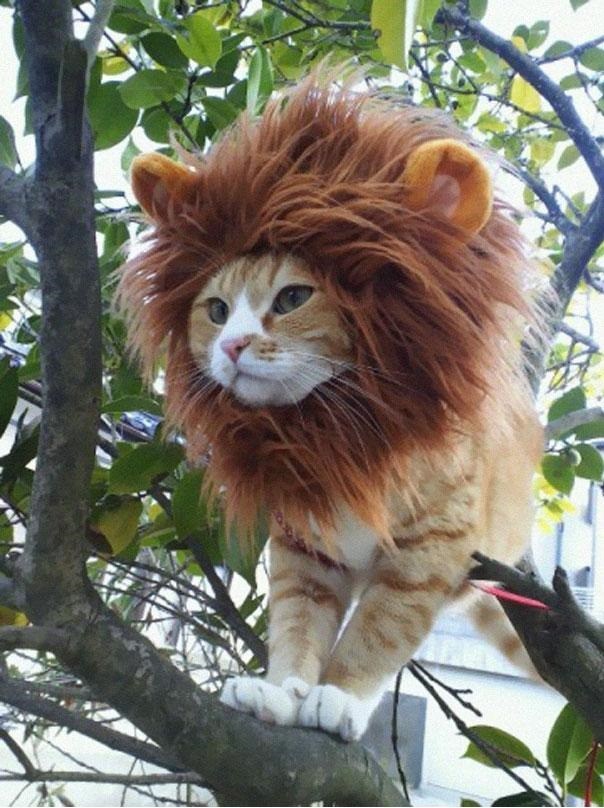 Funny Halloween Costumes for Pets - CAT IN WATER