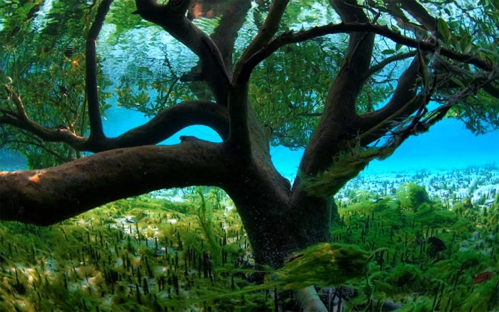 World's Most Beautiful Trees