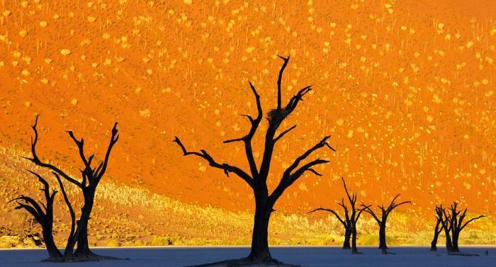World's Most Beautiful Trees