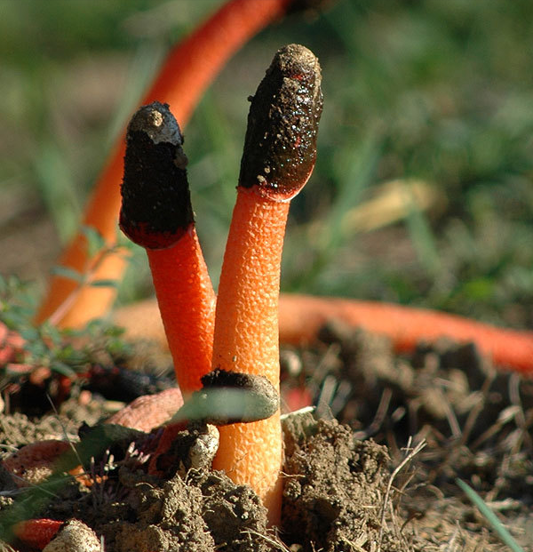 Bizzare Mushrooms That Actually Exist