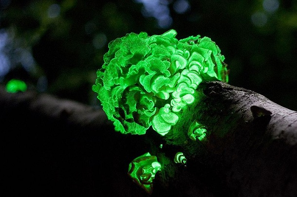 The Most Beautiful Mushrooms You Have Never Seen
