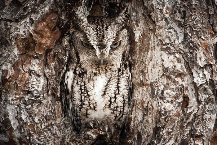The Amazing World of Owls
