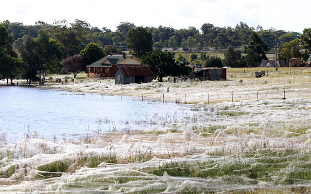 Small Australian Town Covered With Millions of Cobwebs