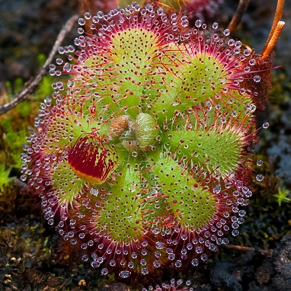Coolest Carnivorous Plants That Will Scare The Hell Out of You