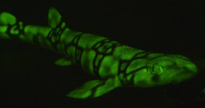 Spectacular Coral Reef Glowing Fish