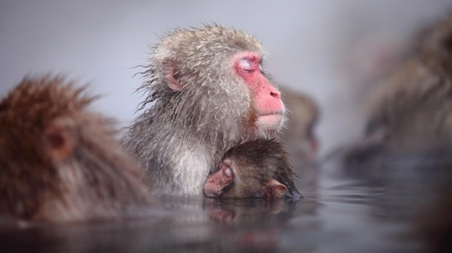 Adorable Monkeys As Expressive As Humans