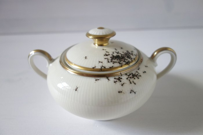 Vintage Porcelain Dishes Covered With Creepy Ants