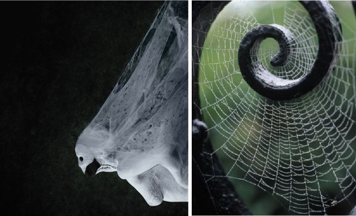 Astounding Spider Web Art